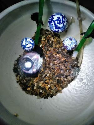 水草を避難し、がらんどうになった睡蓮鉢