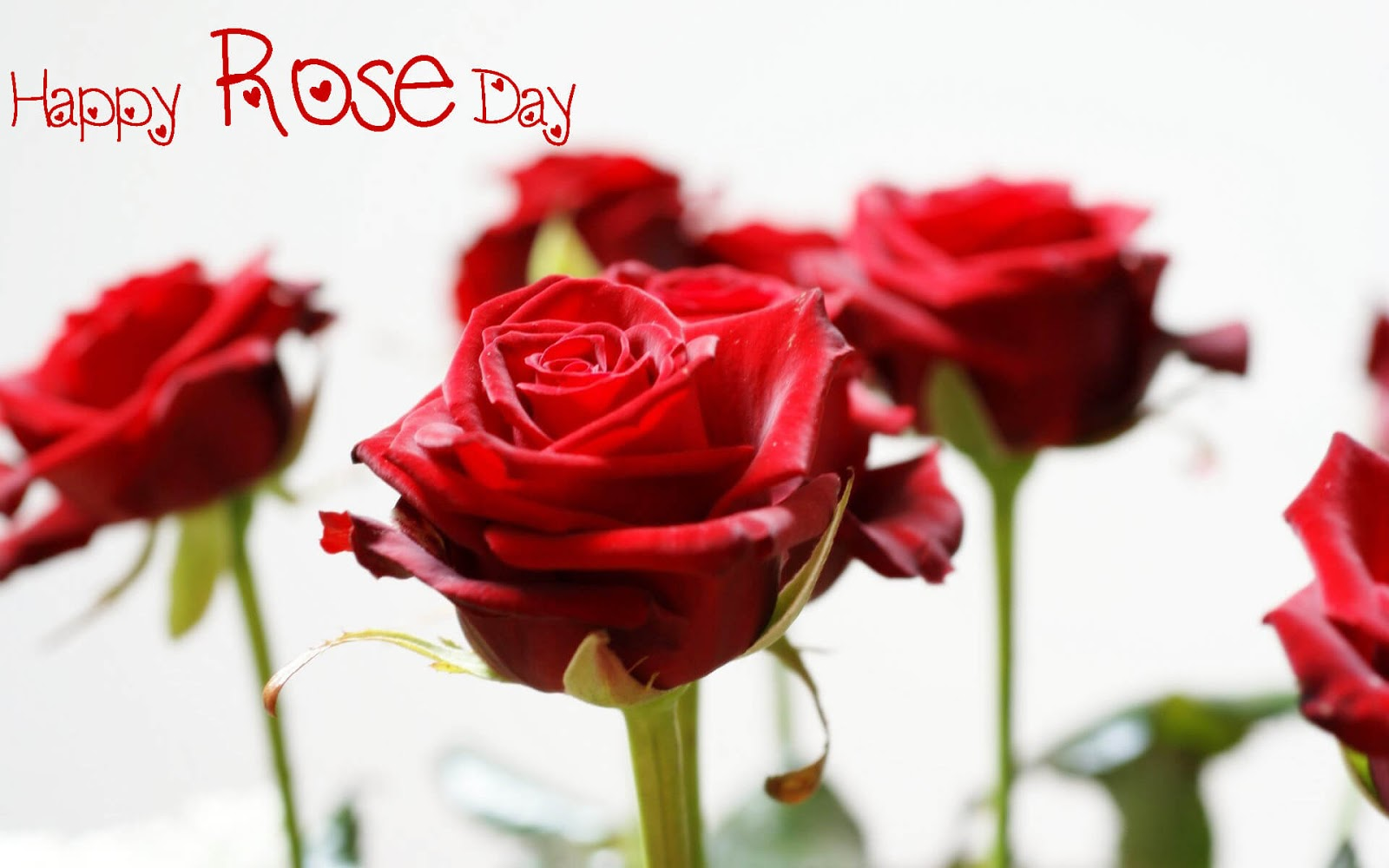 Happy Rose Day HD Pics