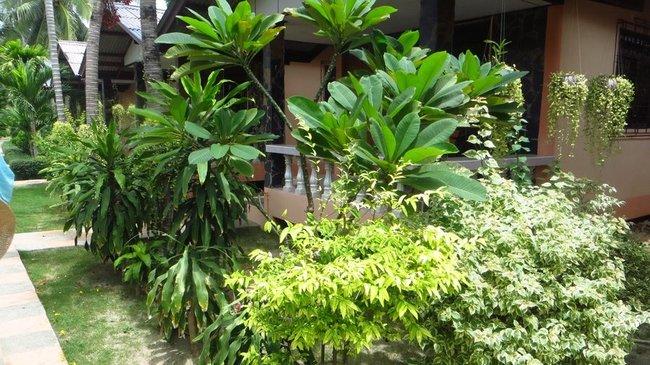 Растения отеля