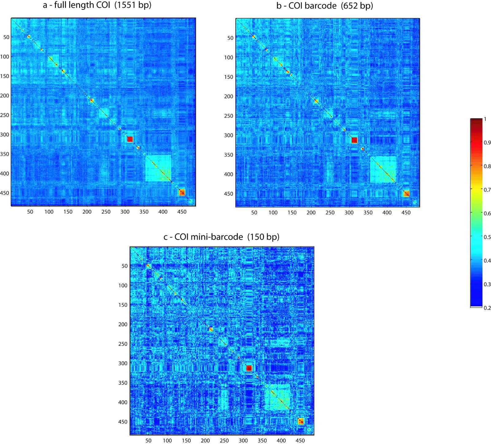 DNA Barcoding: Marine Klee-diagrams (3)