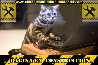 articulo-sobre-gatos-en-construcción