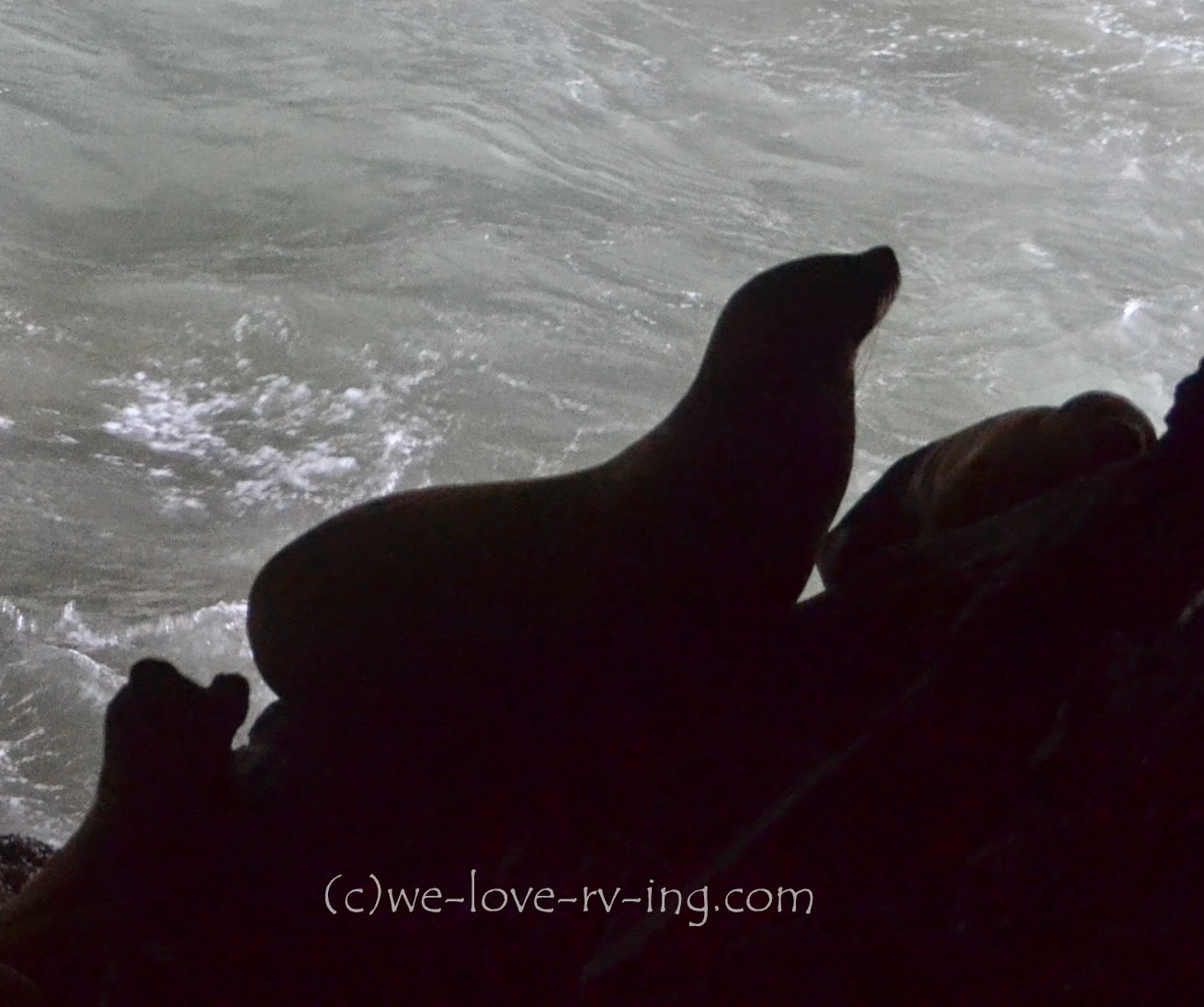 The silhouette of the sea lion