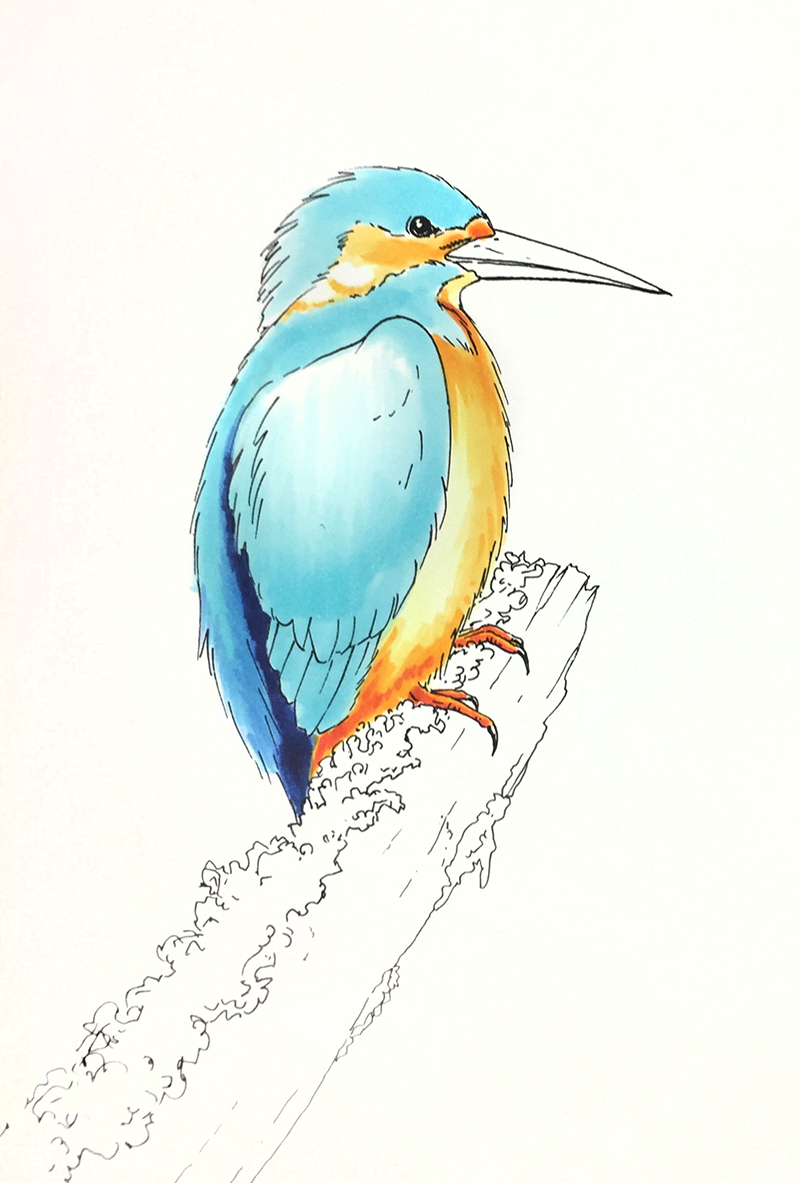 I Like Markers: Coloring a kingfisher bird