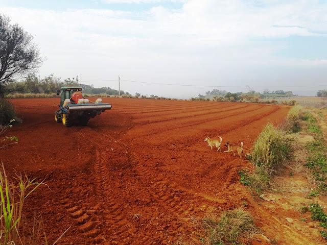 【菜脯埕】種植九號花生的耕地,我們這邊是紅土