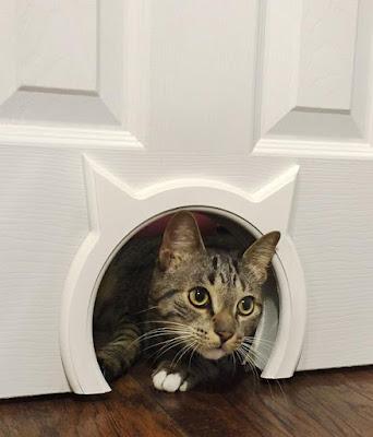 Kittypass