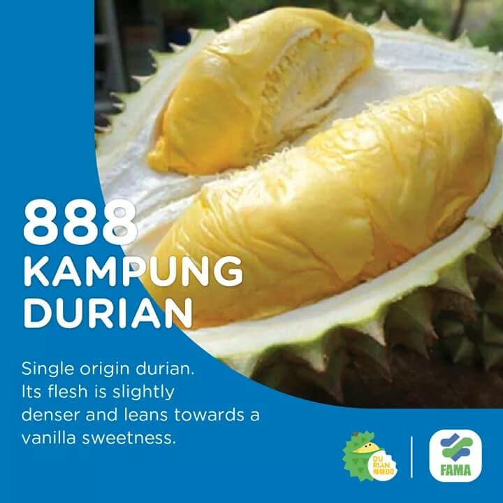 This image has an empty alt attribute; its file name is Jenis%2BJenis%2BDurian%2B18.jpg