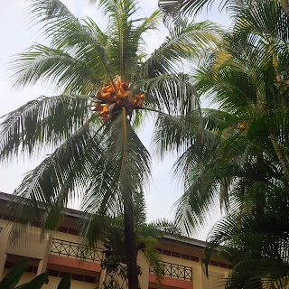 bangsar hotels, business travel malaysia, cuti cuti malaysia, cuti kuala lumpur, holiday, hotels, kuala lumpur hotels reviews, Shah's Village Hotel Kuala Lumpur