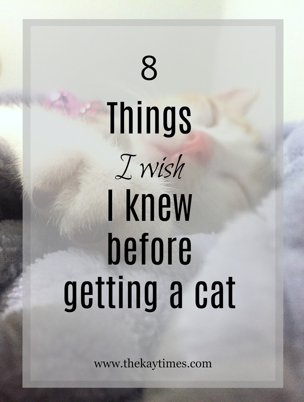 what you should know about cats