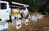 Μετακίνηση μελισσιών: Ποσο καιρο θελει το μελίσσι να προσαρμοστεί στην καινούργια θέση;
