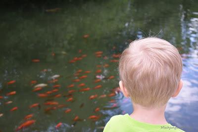 Christopher schaut den Fischen zu