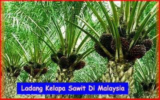 Saiz Keluasan Ladang Kelapa Sawit Di Malaysia