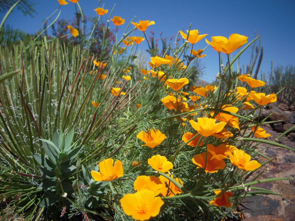 Az Treasures Desert Botanical Gardens