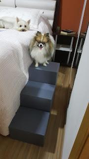 escadas para cães com lesão