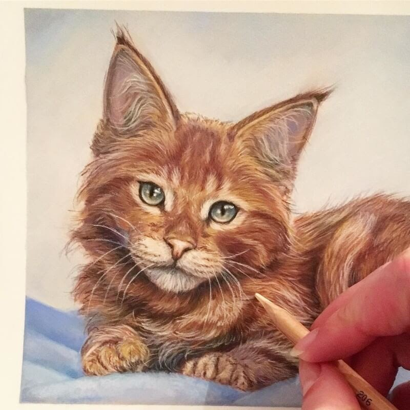 11-Red-Maine-Coon-Kitten-Tatjana-Bril-Pastel-Drawings-of-Detailed-Animals-www-designstack-co