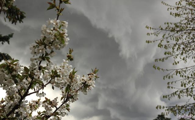 Nuage d'orage et cerisier en fleurs