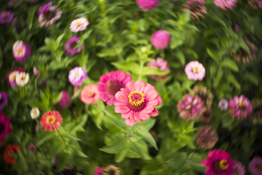 Lensbaby Trio 28mm f/3.5 — Twist