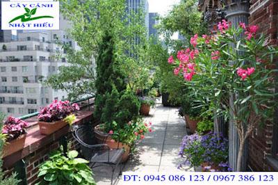 Thiết kế sân vườn sâm thượng đẹp và phong thủy