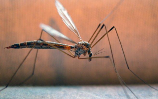 Πώς θα καταφέρετε να διώξετε τα κουνούπια από το χώρο σας
