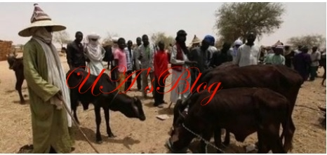 Farmers-herders clashes: Miyetti Allah supports cattle colony, rejects ranching system