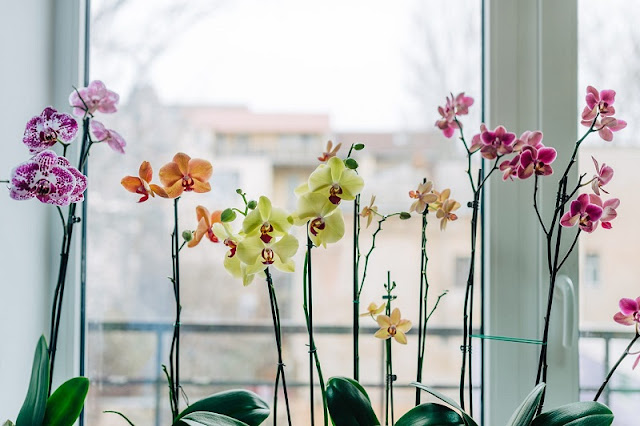 The beauty of orchids 2