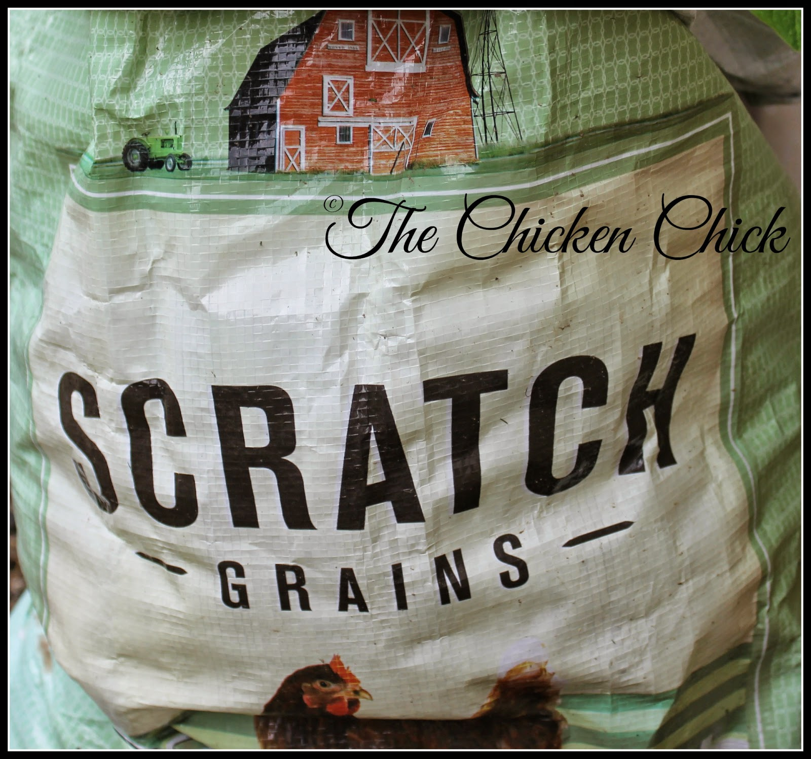 Chicken scratch is NOT chicken feed. The contents of scratch varies by country and region, but it consists primarily of cracked corn and any number of other grains. It's a source of energy (think: carbs) but is not a good source of vitamins, minerals or protein.