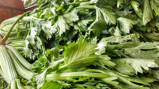 daun seledri untuk kesehatan