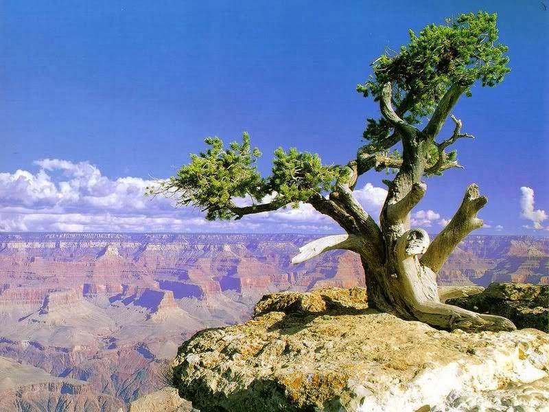 http://www.irwantoshut.net/miracle_tree.html