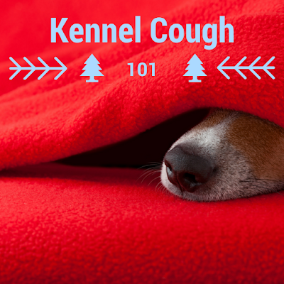 Incubation Period Of Kennel Cough For Dogs