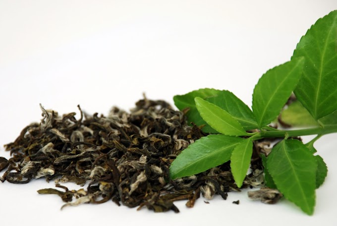 You Must Know | How Much Caffeine in A Normal Tea