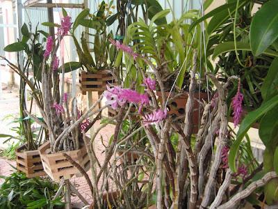 Chợ lan rừng Pleiku