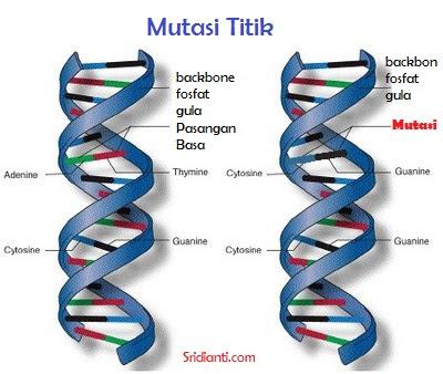 Macam Macam Mutasi Berdasarkan Materi Genetisnya