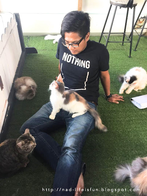 House of Cat, Penang