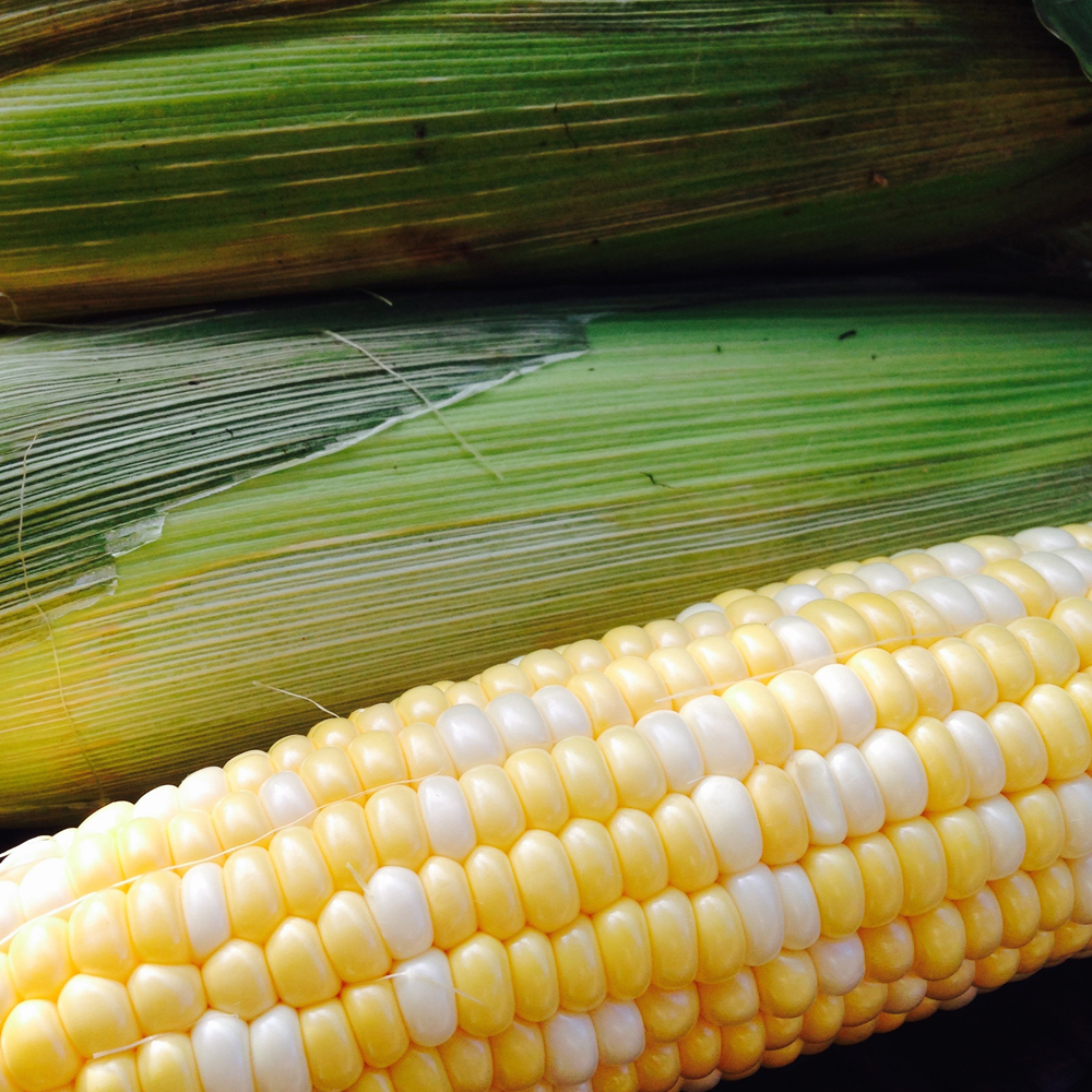 Fresh ears of NJ-grown bicolor sweet corn.
