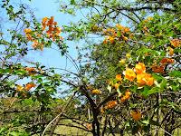 Primavera Parque Ecológico de Barueri