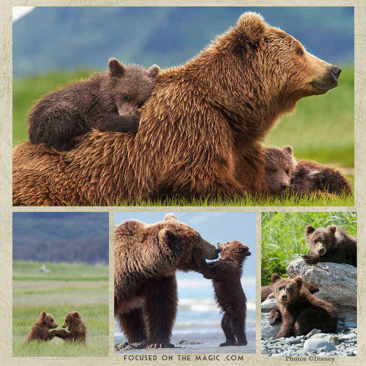 Disneynature Bears Movie Review + Activity Sheets [DVD/Blu-ray]