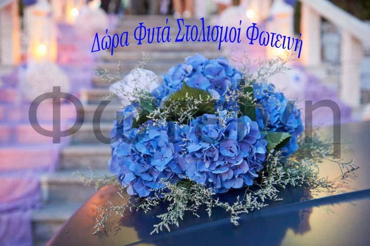 Δώρα Φυτά Φωτεινή Βαρνάβας