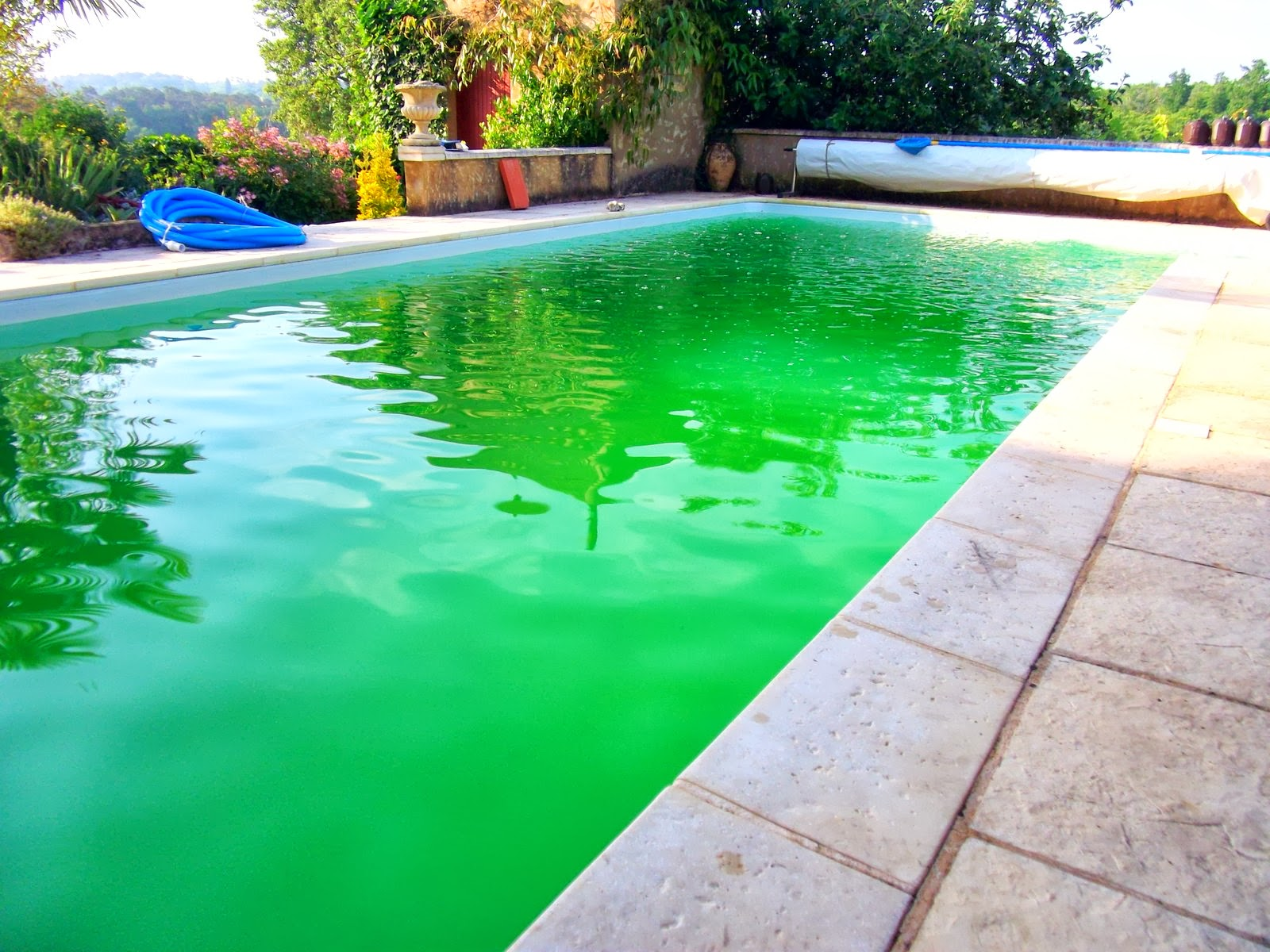 Magnon 39 s meanderings yuk - Can you swim after putting algaecide in pool ...
