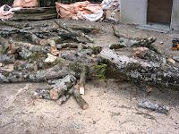 ほとんど乾燥している枝