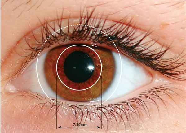 Freeporn cornea