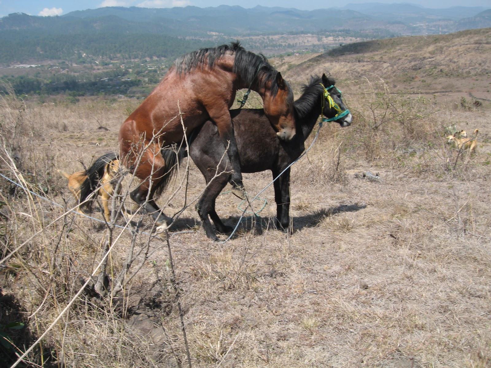 Pferde Zucht