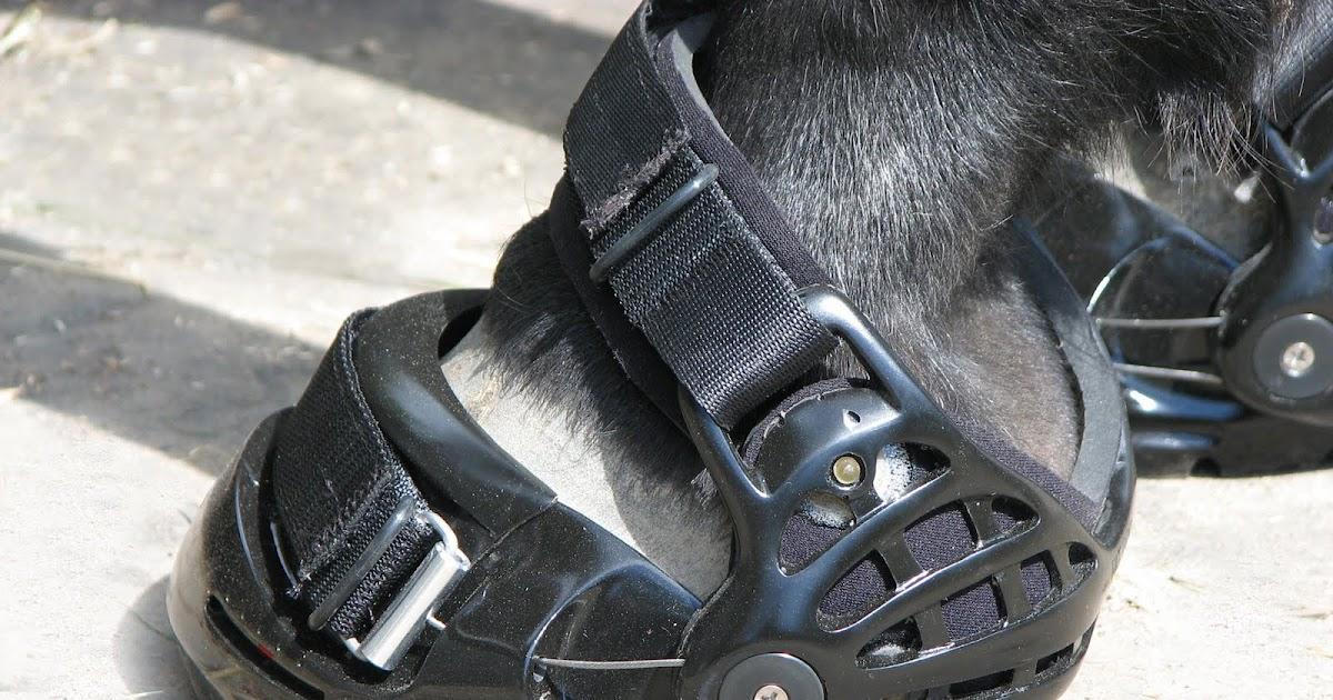 Carpus Valgus Horses