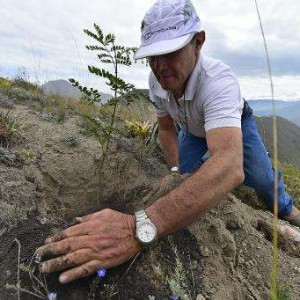 Ecuador Just Set The World Record For Reforestation!