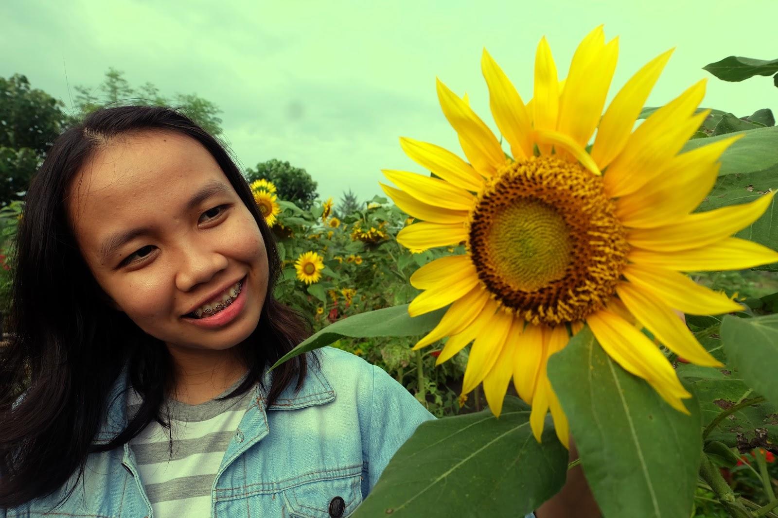Taman bunga matahari Bantul