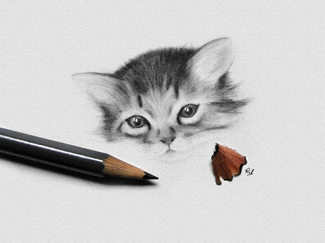 05-Kitten-WIP-Roberto-Matteazzi-Animal-Drawings-in-Black-and-White-Charcoal-Portraits-www-designstack-co