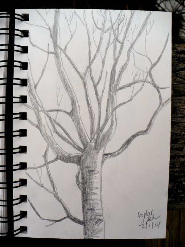 Poplar tree in winter pencil sketch