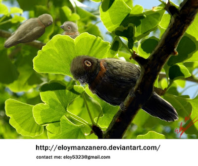 Cretaceous birds