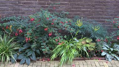 Secret Garden: Fachadas verdes en el centro de la ciudad holandesa de Zwolle