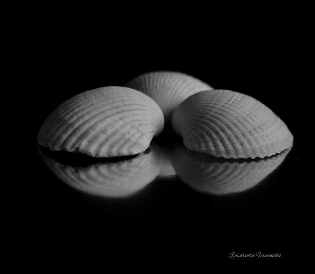 Las tres conchas - Encarnita Fernández