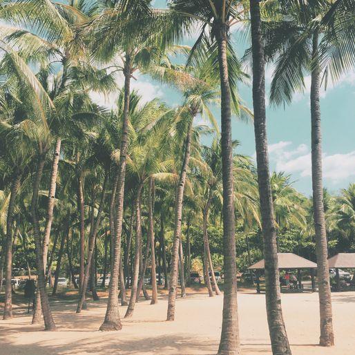 Coconut trees at Anvaya Cove