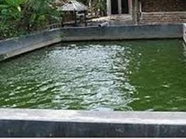 Salah satu penentu keberhasilan dalam budidaya ikan lele yaitu tingkat keidupan bibit ik Kolam dan Air yang Baik Supaya Lele Bisa Cepat Beradaptasi.